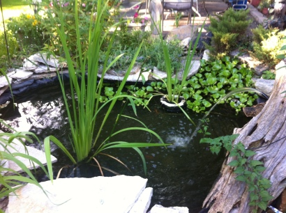 The Pond Plants