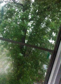 And the back yard trees blew hard... it was cool.