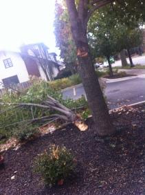 Poor tree.