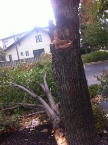 Close up of freak storm damage